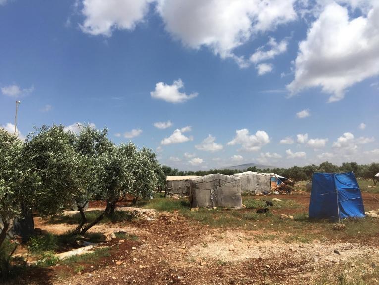 Des tentes de fortune sont installées au milieu d'une oliveraie aux abords d'uncamp de personnes déplacées d'Idlib.  © Mohammed  Homidan/MSF